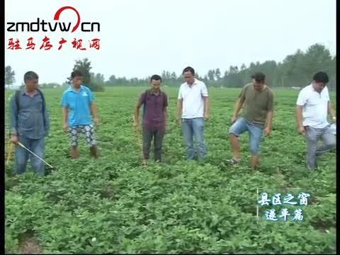 遂平:发展花生大规模种植让农民受益