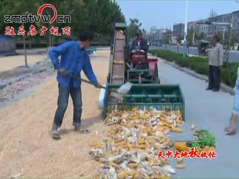 平舆:130万亩秋作物陆续开始收割