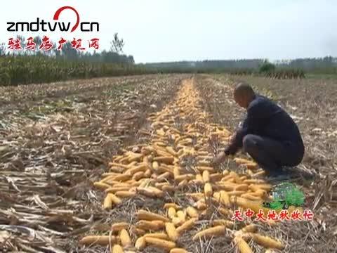 平舆:130万亩秋作物陆续进入收获期