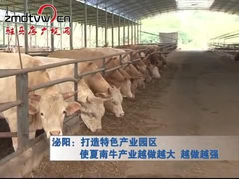 泌阳:打造特色产业园区 使夏南牛产业越做越大