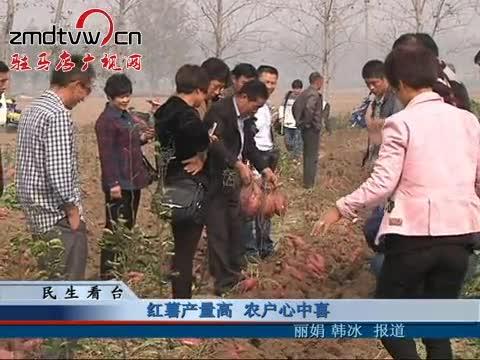 红薯产量高 农户心中喜