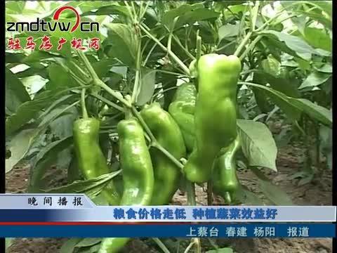 粮食价格走低 种植蔬菜效益好