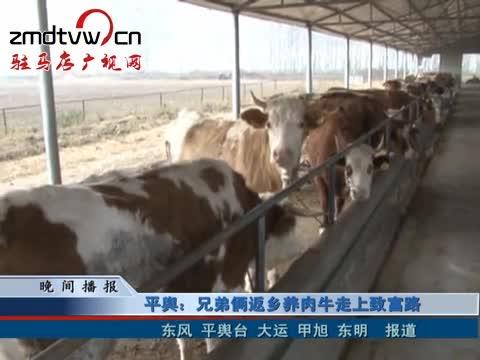 平舆:兄弟俩返乡养肉牛走上致富路