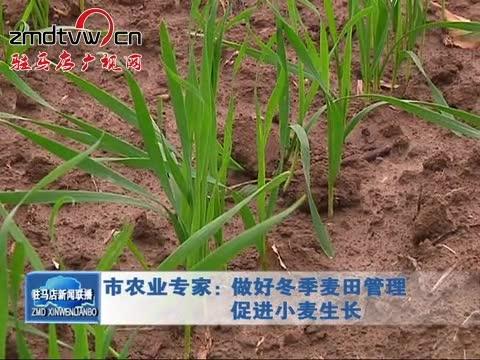 市农业专家:做好冬季麦田管理 促进小麦生长
