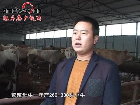 泌阳做大做强牛产业