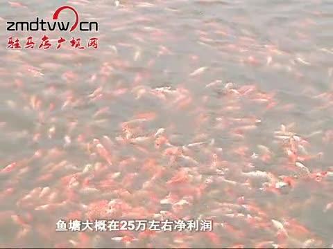小小观赏鱼 游向大市场