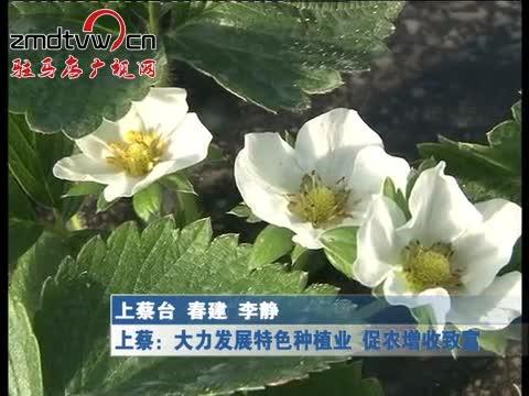 上蔡:大力发展特色种植业 促农增收致富