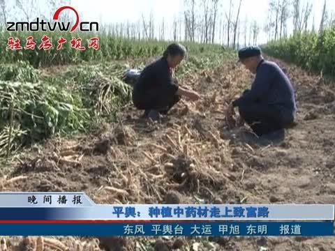 平舆:种植中药材走上致富路
