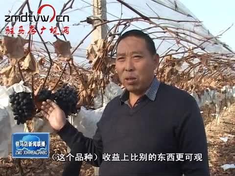 泌阳:发展特色种植 拓宽农民致富渠道