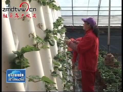 遂平:大力发展生态休闲农业