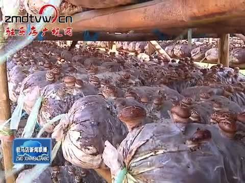 驿城区 确山:发展香菇种植 增加农民收入