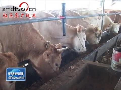泌阳:发展牛经济 壮大牛产业