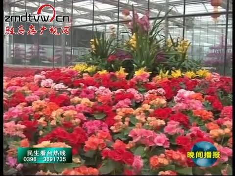 嵖岈山温泉小镇:百花齐放迎游客