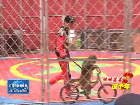 南海公园动物表演秀增添节日喜庆