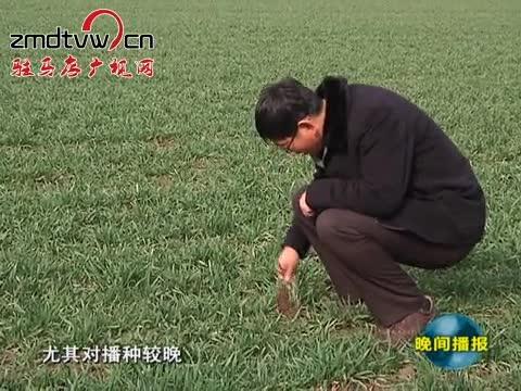 小麦专家为雨后麦管开良方
