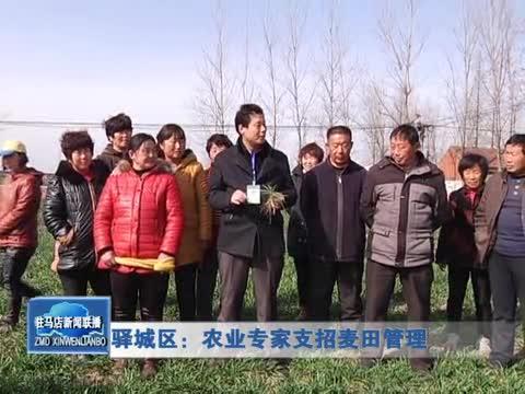 驿城区:农业专家支招麦田管理