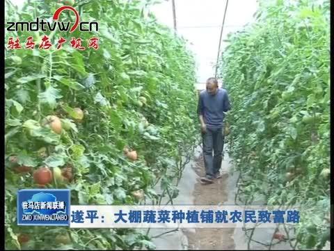 遂平:大棚蔬菜种植铺就农民致富路