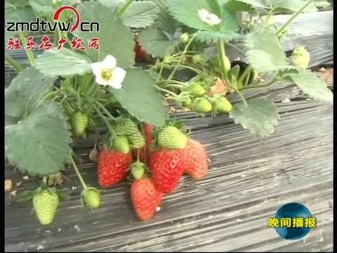 """遂平:反季节蔬菜采摘搞活""""观光农业"""""""