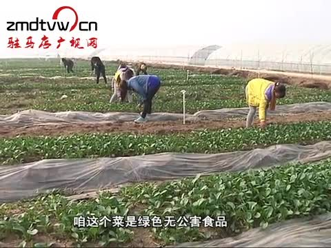 遂平:大力发展生态农业