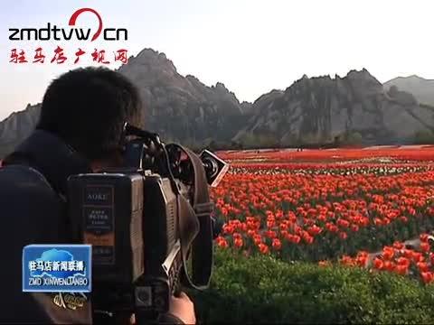 央视记者采访嵖岈山郁金香园
