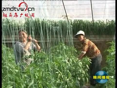 上蔡:土地流转助农增收见实效
