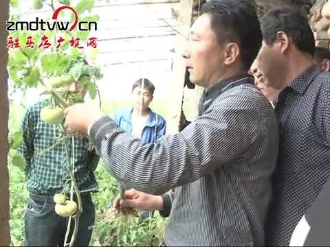 泌阳:农业专家开讲堂 农民致富有保障