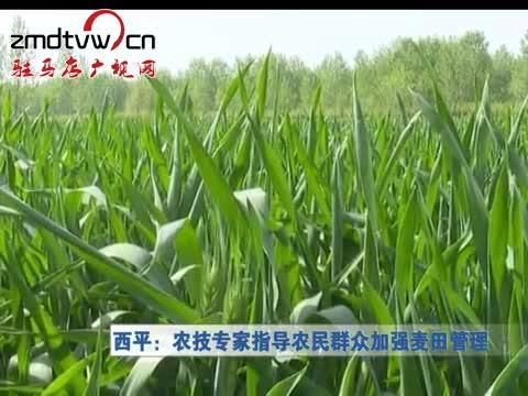 西平:农技专家指导农民群众加强麦田管理