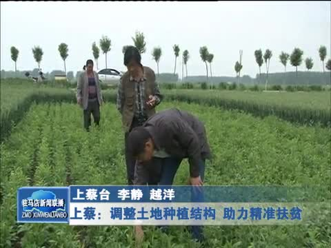 上蔡:调整土地种植结构 助力精准扶贫