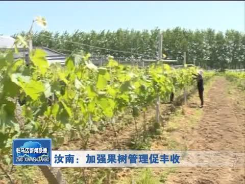 汝南:加强果树管理促丰收