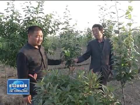 黄文学:彭桥村的当家人
