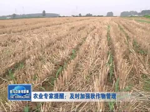 农业专家提醒:及时加强秋作物管理