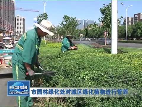 市园林绿化处对城区绿化植物进行管养