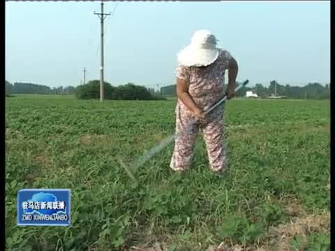 上蔡平舆:农民朋友抓住有利时机加强秋田管理
