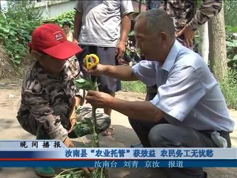 """汝南县""""农业托管""""获效益 农民务工无忧愁"""