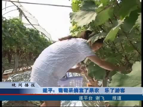 遂平:葡萄采摘富了果农 乐了游客