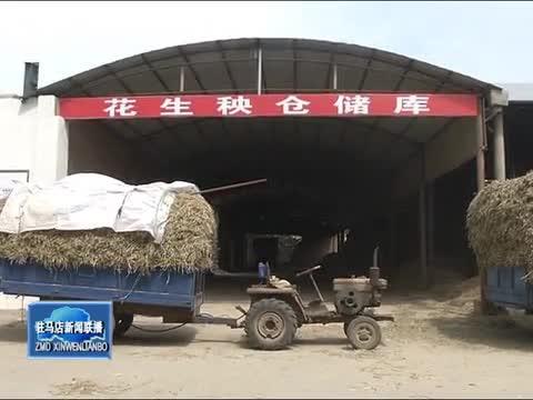 """正阳县:""""花生秧行""""助推秸秆综合利用 助农增收"""