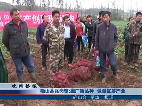 确山县瓦岗镇:推广新品种 做强红薯产业