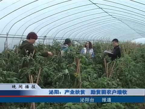 泌阳:产业扶贫 助贫困农户增收