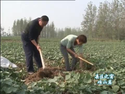确山:带领群众发展特色产业 促进脱贫攻坚工作