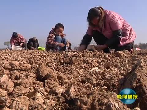 平舆:大力发展现代农业 促进贫困户脱贫致富