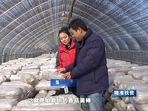 香菇产业助推精准扶贫
