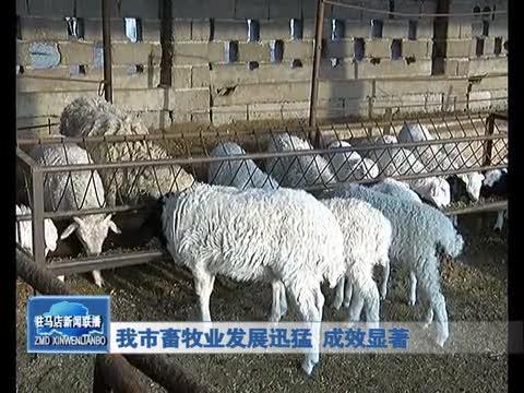 我市畜牧业发展迅猛 成效显著