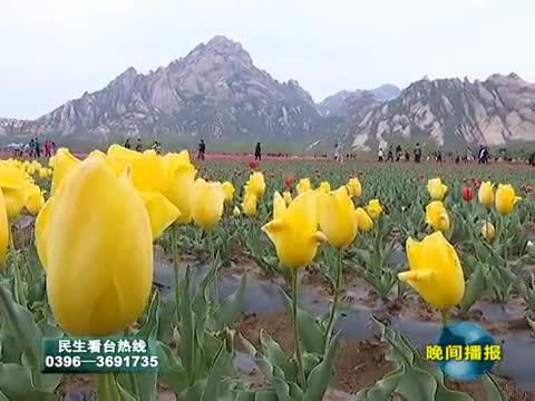 嵖岈山温泉小镇郁金香园将于3.18日开园