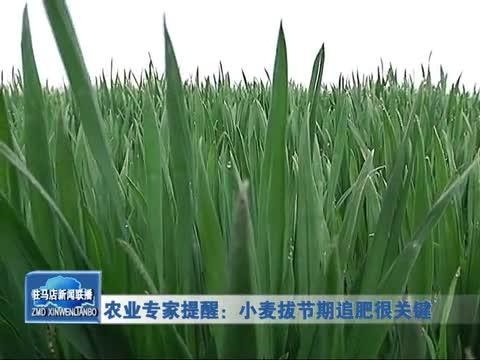 农业专家提醒:小麦拔节期追肥很关键