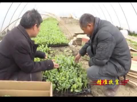 正阳县:强化党建引领 助推精准扶贫