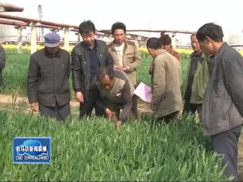 农业专家指导农民做好小麦田间管理