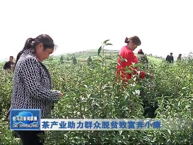 茶产业助力群众脱贫致富奔小康