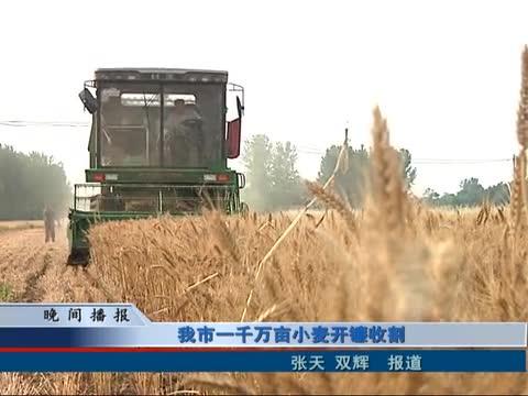 我市一千万亩小麦开镰收割