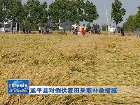 遂平县对倒伏麦田采取补救措施