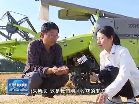 优质小麦助力夏粮丰产增收